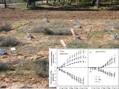 Is Light The Key Factor For The Success Of Protective Tubes In Mediterranean Reforestation?